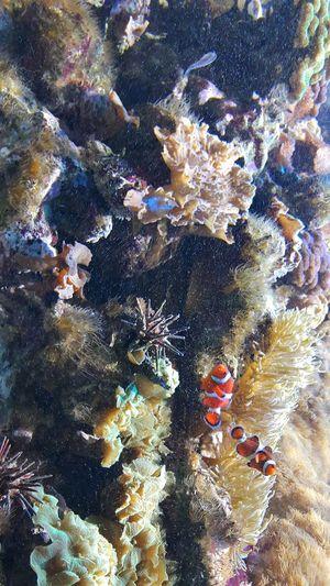 Nemo Clown Fish Brilliant Colors New England Aquarium  Aquarium Life Fish