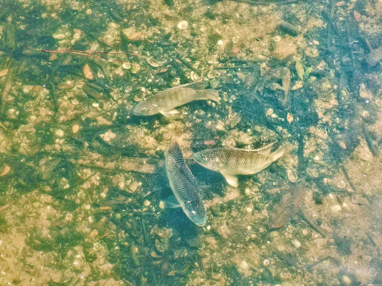 HIGH ANGLE VIEW OF FISH IN SEA