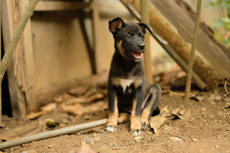 Puppy EyeEm