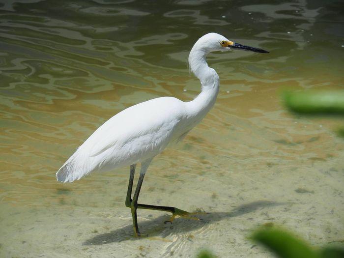 Close-Up Of Bird Perching In Lake