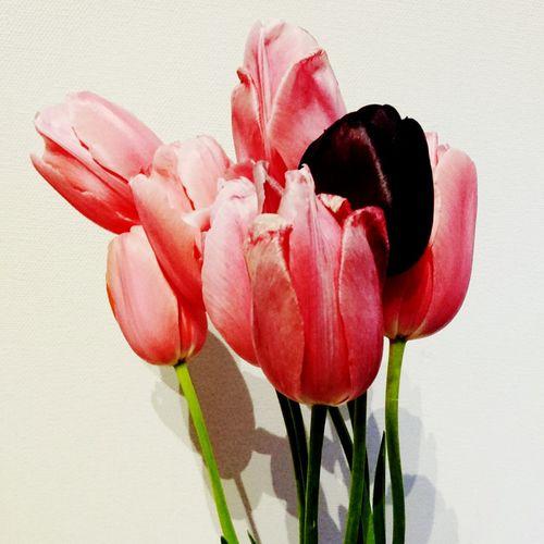 Photography 庭の花 写真 土いじり チューリップ