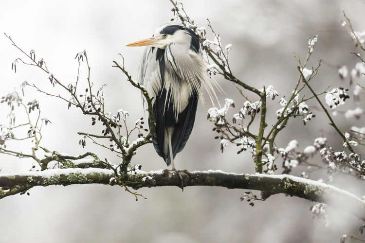 Low angle view of bird perching on branch during winter
