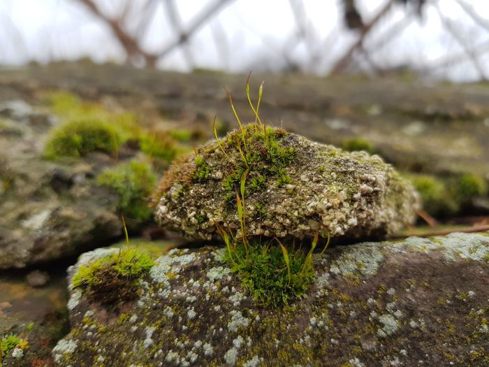 Rock Nature Photography Green Color Stone Nature Focus On Foreground Growth Thorn Plant Close-up Outdoors Beauty In Nature Grass Freshness Moss