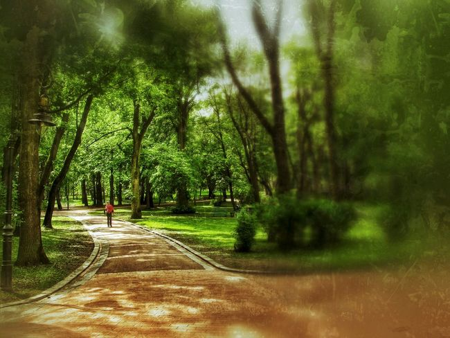 Nature_collection Green Ukraine Grange Lviv Park