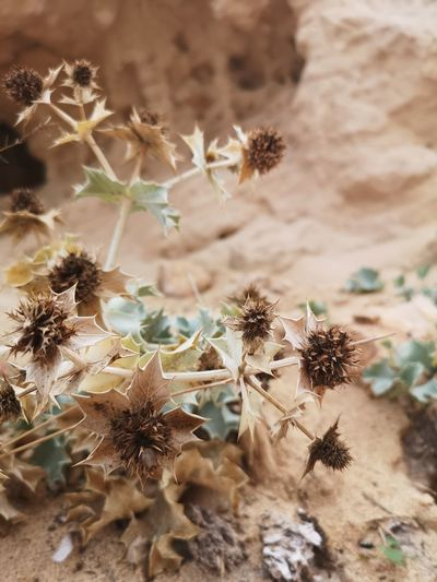 Wild nature. EyeEmNewHere Landscape Nofilters Enjoying The Sun Wildnature Tree Desert Arid Climate Cactus Pinaceae Prickly Pear Cactus Thorn Close-up Sky Plant Rock Formation Rocky Mountains Physical Geography Arid Landscape Natural Landmark