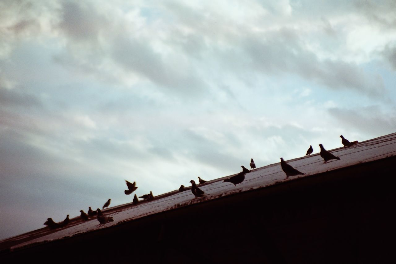 LOW ANGLE VIEW OF BIRDS ON ROOF AGAINST SKY