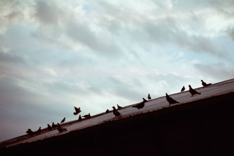 Low angle view of birds perching on roof