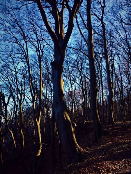 Jasmund Nationalpark Trees And Sky Trees And Nature Trees Woods Rügen Mecklenburg-Vorpommern