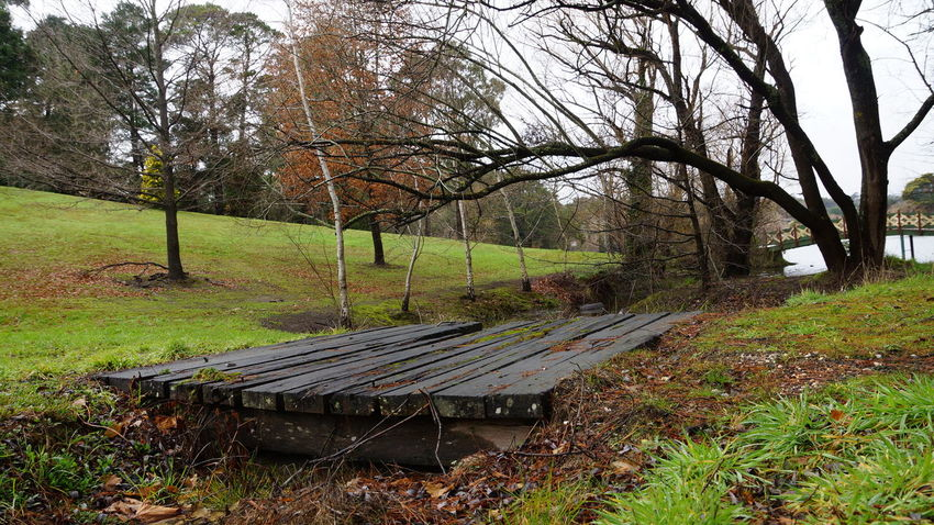 Autumn Grass Green Color Landscape Mt Macedon Nature Outdoors Rural Scene Shyraphotography Tree Victoria, Australia