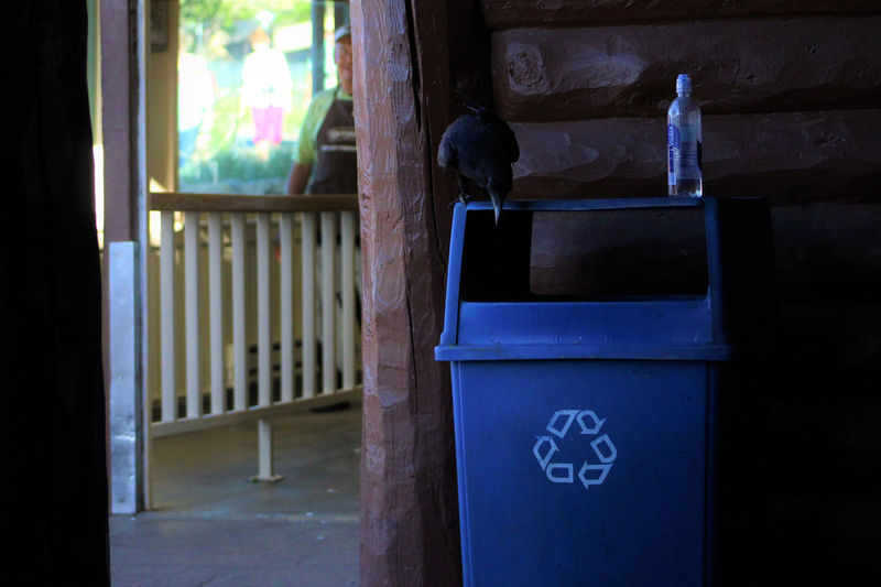 Raven on recycling container, Bright Angel Lodge, Grand Canyon. Animals Bird Black Blackandwhite Bright Angel Lodge Grand Canyon Grand Canyon National Park Nature One Animal Raptor Raven Recycling Recycling Container Shadow Wildlife Adapted To The City