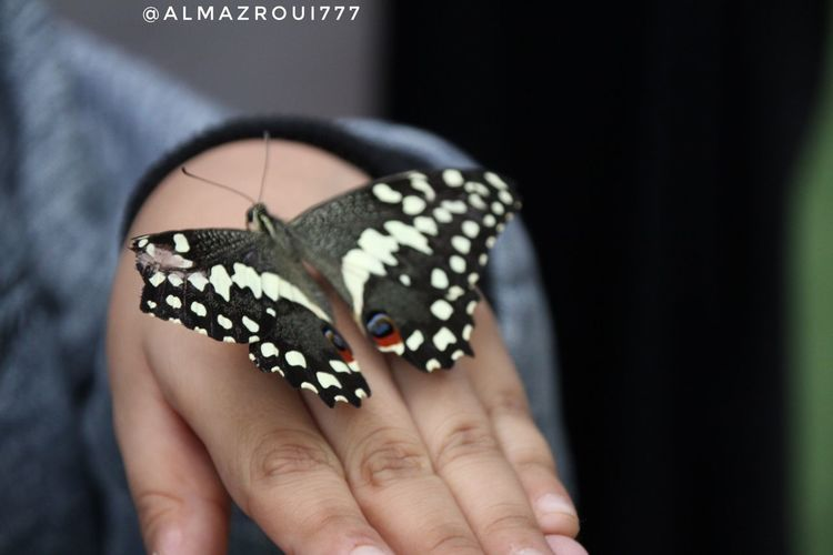 Butterfly فراشه فراشه Human Body Part Human Hand One Person Hand Close-up Butterfly - Insect Body Part Finger Nail Art Invertebrate Nail One Animal Nail Polish Holding Insect Animal Wildlife Real People Focus On Foreground Animal Wing