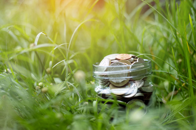 Close-up of wedding rings on grass in field