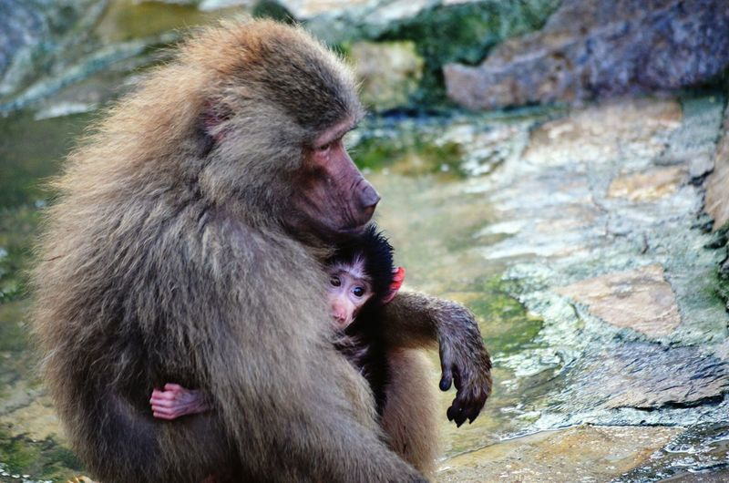 Infant Embracing Monkey By Stream