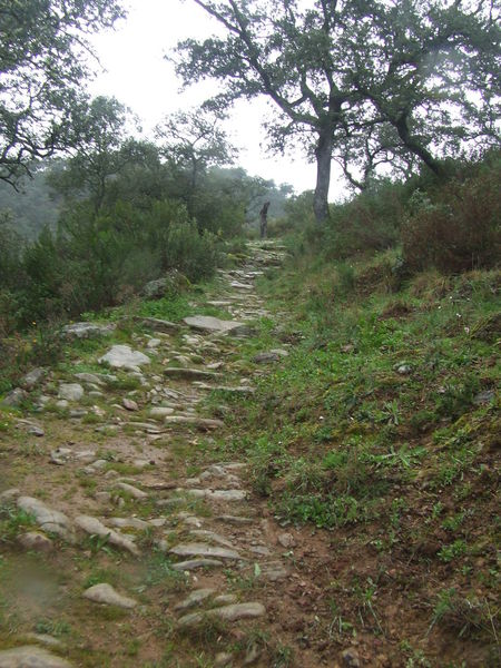 Dirt Path Fog Foggy Day Foggy Landscape Foggy Morning Foggy Weather Footpath Forest Grass Grassy Grassy Field Green Color Mountain Range Non-urban Scene Paved Path Remote Solitude The Way Forward Trail Tranquility Tree Trekking Walkway