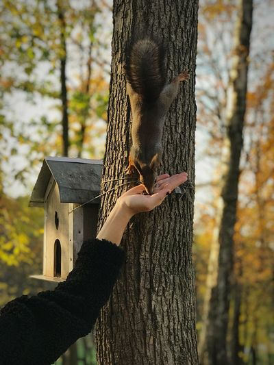 Cropped hand of woman feeding squirrel on tee trunk