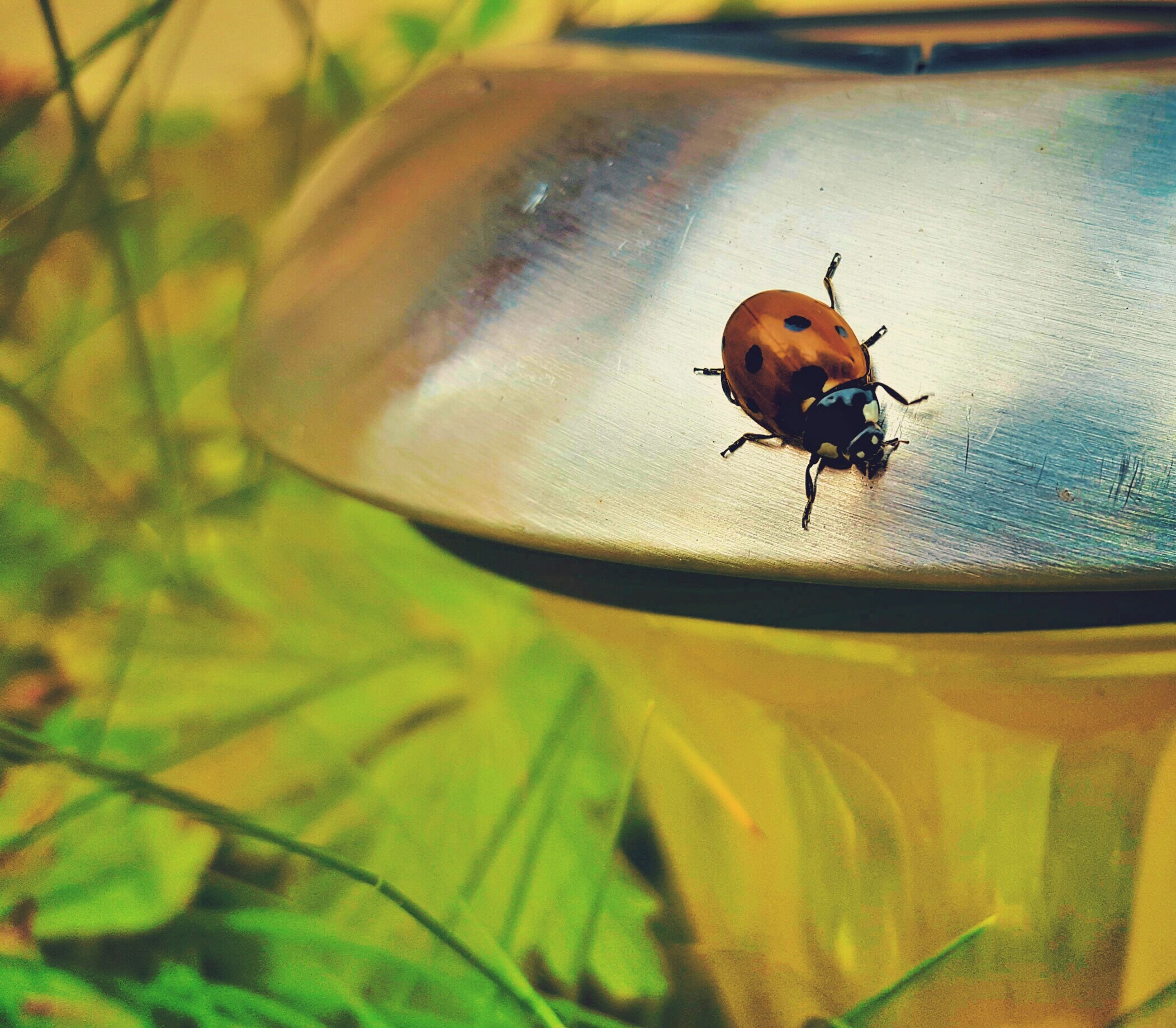 one animal, animal themes, animals in the wild, wildlife, insect, ladybug, selective focus, close-up, focus on foreground, perching, brown, zoology, beetle, day, vibrant color, animal behavior, fragility, extreme close-up, tiny, green