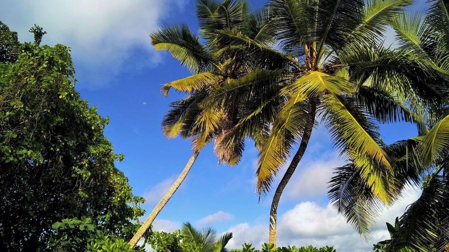 Beauty In Nature Blue Cloud - Sky Coconut Palm Tree Day Endemic Green Color Island Low Angle View Nature Palm Tree Seychelles Sky Sunlight Tranquil Scene Tranquility Tree