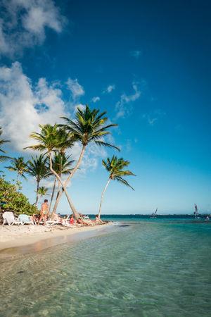 Beach La Caravelle, Guadeloupe. Aida AidaDiva Cruise Ship Guadeloupe La Caravelle Travel Aidacruises Beach Beauty In Nature Blue Carribean Nature Palm Tree Sand Sea Sky Travel Destinations Tree Water EyeEmNewHere