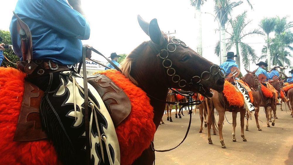 Comitiva de mulas, no Desfile de cavaleiros e comitivas, na cidade de Taquarussu - MS, Brasil. Sertanejo  Raizes Interior Do Brasil
