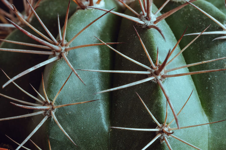 Succulent Plant Close-up Green Color Cactus Plant Full Frame Backgrounds Plant Part Thorn Thorns Clump Side Lighting
