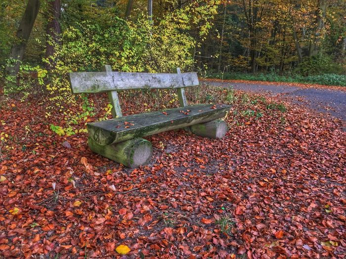 Bench in Fall Tree Leaf Nature Outdoors Autumn Forest Change No People Growth Beauty In Nature Day Park - Man Made Space Plant Bench Leaves Red Fall Seasons