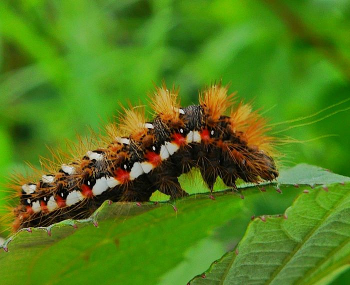 little hairy caterpillar... Macroclique EyeEm Nature Lover Streamzoofamily Our Planet