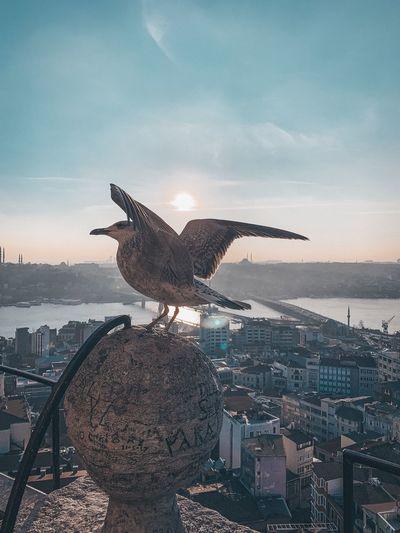 Seagull flying in city against sky
