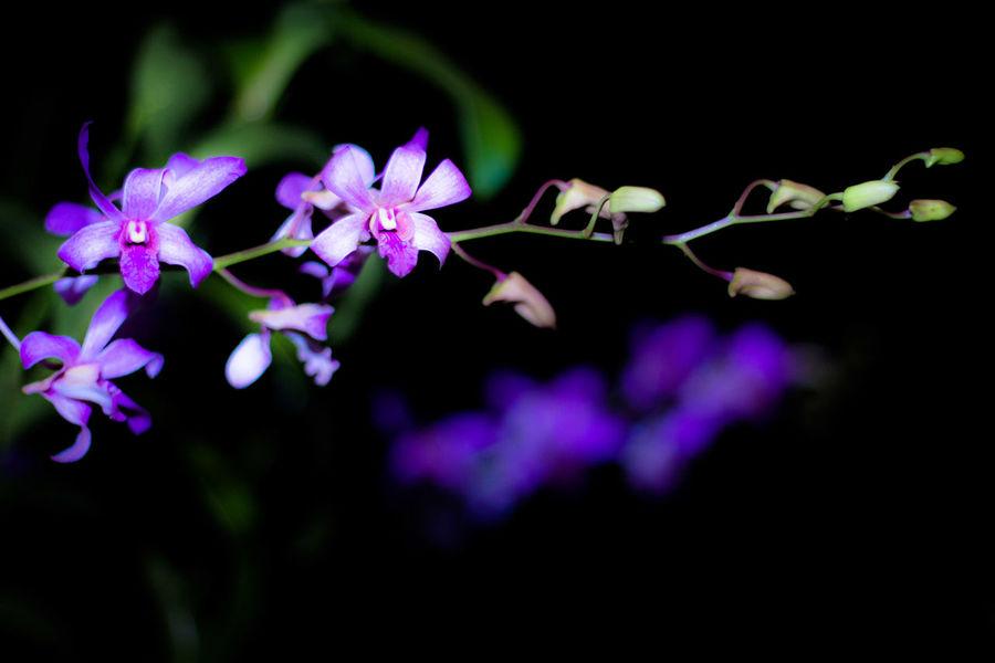 The Orchid EyeEmNewHere #EyeEmReady EyeEm Ready   Flower Plant Nature Beauty In Nature Fragility Purple Petal Flower Head Leaf