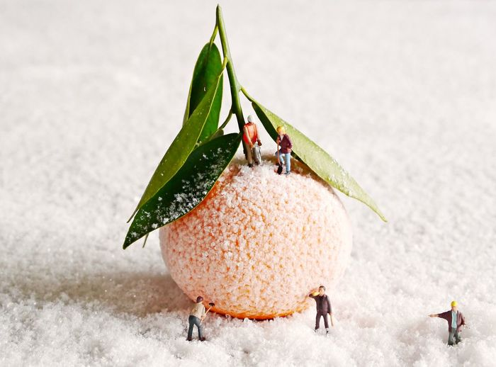 ArtWork Working On A Project Close-up Cold Temperature Day Diorama Focus On Foreground Food Freshness Frozen Fruit Funny Pic Healthy Eating Leaf Little Figure Little Story Nature No People Orange Fruit Outdoors Play Toy Snow Studio Shot White Background Winter