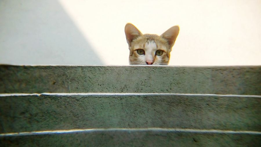 Portrait of cat on staircase