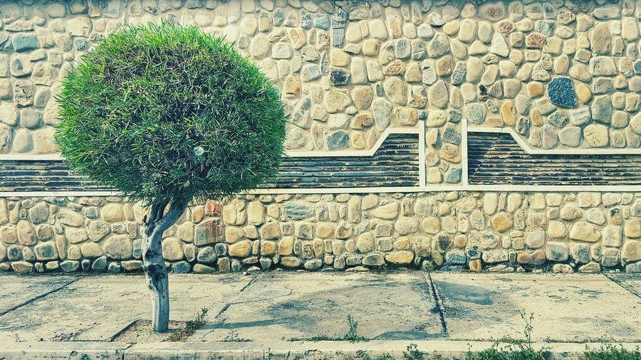 Greenalone Tree Green Wall Rocks
