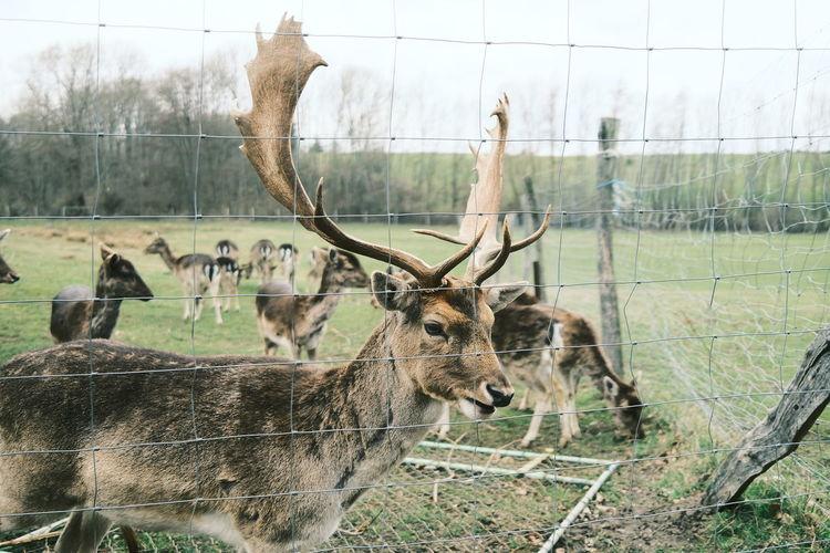 View of deer in zoo