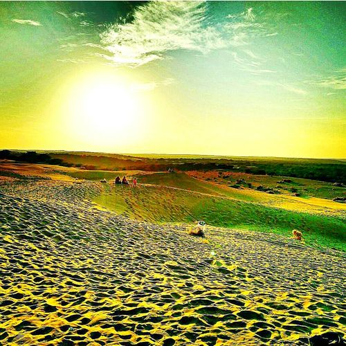 Rajasthan diaries Scenics Dramatic Sky Samsanddunes Sunset Sand Beach Camels Outdoors Beautiful Nature Beauty In Nature