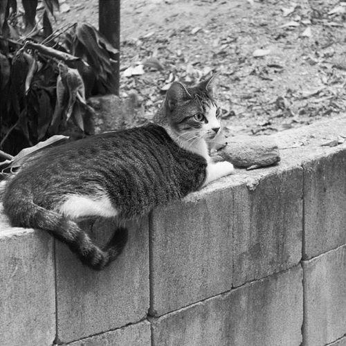 Nem gosto tanto assim de gatos, mas como tem uma penca no condomínio, são eles mesmos os privilegiados haha Nikon D3100 Cat