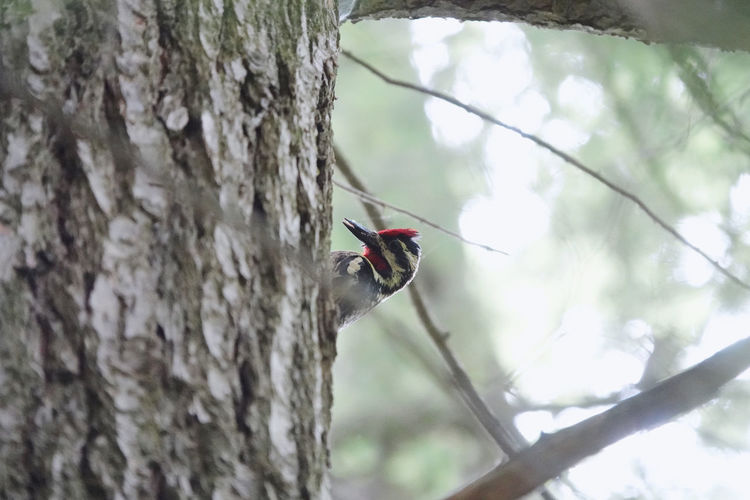 Low angle view of insect on tree trunk