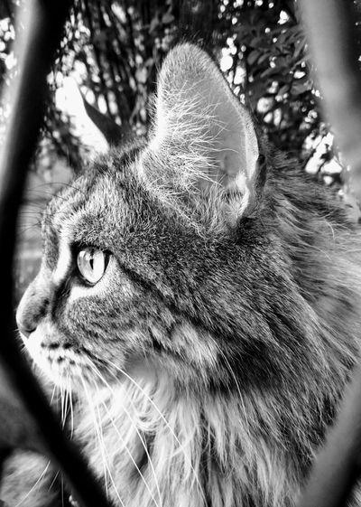 cat Leopard Pets Domestic Cat Feline Close-up Cat Family