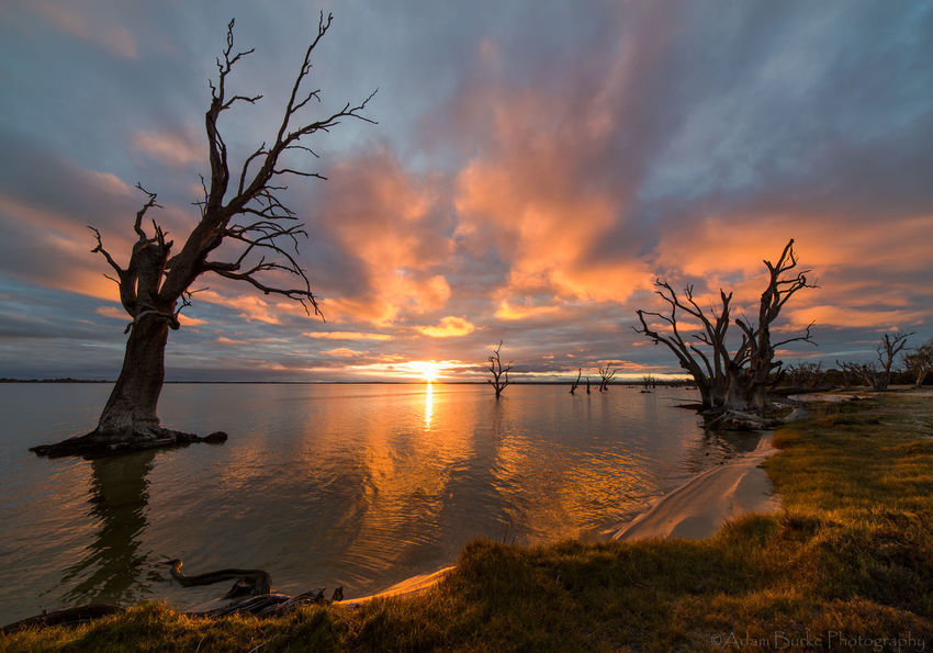 Australia Beauty In Nature Dramatic Sky Horizon Over Water Lake Lake Bonney Landscape Nature No People Orange Color Outdoors Reflection Remote Scenics South Australia Sunset Tranquil Scene Tree Water