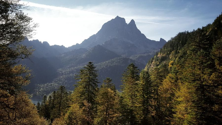 Tree Mountain Tree Area Fog Forest Pine Tree Pinaceae Mountain Peak Sky Mountain Range