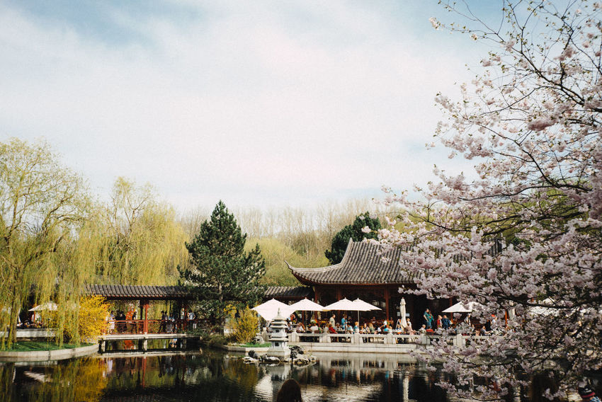 Kirschblütenfest Asian  Asian Culture Cherry Blossoms Architecture Beauty In Nature Building Building Exterior Built Structure Cherry Blossom Cherry Tree Cherryblossom Day Flower Flowering Plant Growth Lake Nature No People Outdoors Plant Sky Springtime Travel Destinations Water Waterfront