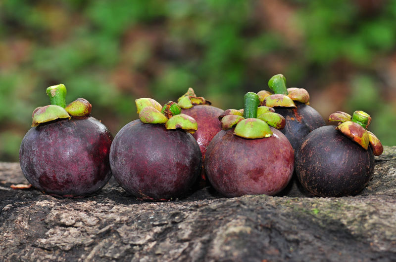 Mangosteen Thai Fruit Nature Fruit Vegetable Agriculture Close-up Food And Drink