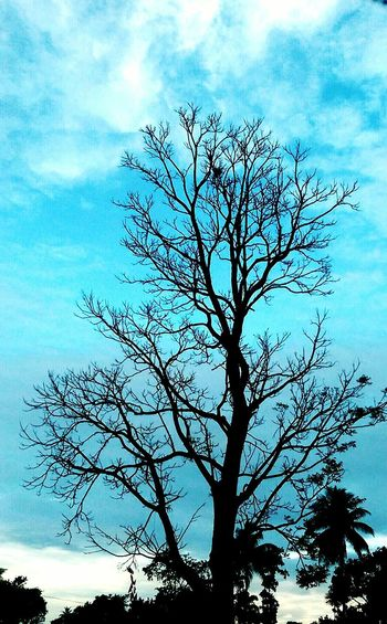 Leaflesstree Leafless Branch Evening Sky with Tree Evening Blue Sky Tree Sky Branch Low Angle View Nature Silhouette Bare Tree Beauty In Nature Blue Cloud - Sky Outdoors Day No People Growth