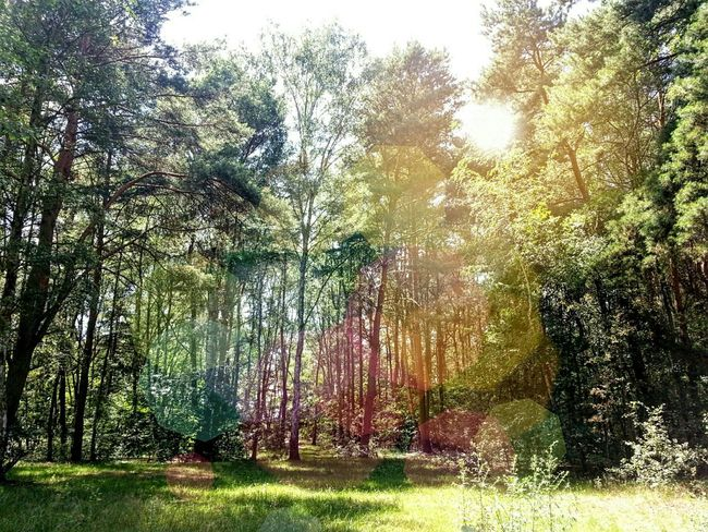 Photography Forest Lensflare Summer