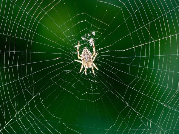 Spider Web Spider Web Survival One Animal Fragility Nature Animal Themes Focus On Foreground Animals In The Wild Close-up Outdoors No People Intricacy Day Complexity Animal Leg
