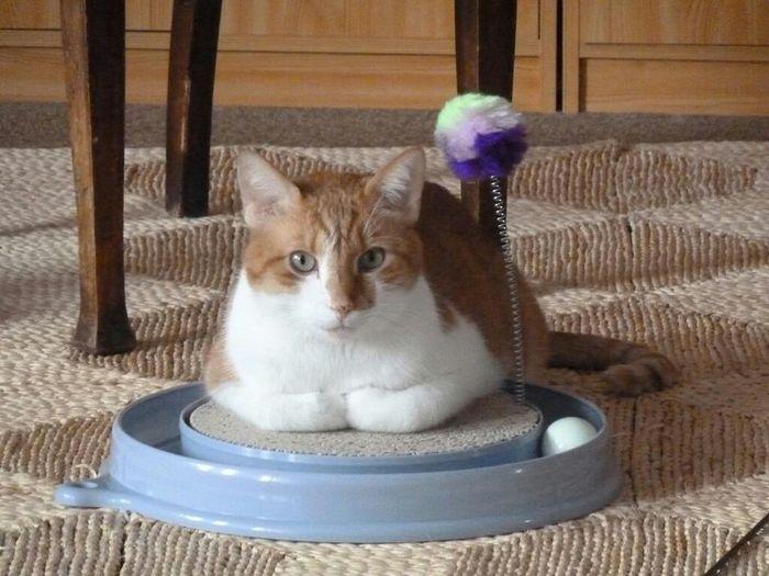 Cats Of EyeEm Animal Cat Lovers Cat♡ Cat Relaxing