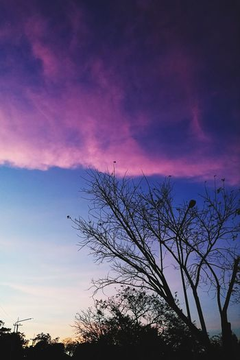 Sunset Sky Silhouette Nature Outdoors Beauty In Nature No People Tree Bird Day Galaxy Pixelated