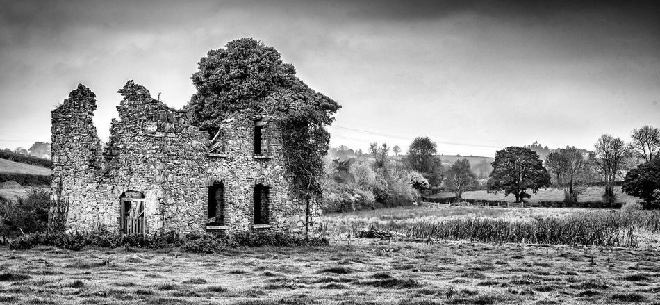 Old School House Tree Building Exterior Buildings Architecture Abandoned Old Ruin Northern Ireland Ireland Scenics
