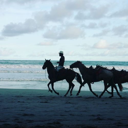 People And Places Costa Rica First Eyeem Photo Horses Beach