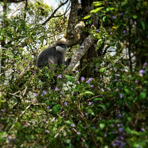 Plant Animal Wildlife Mammal Animals In The Wild Tree One Animal Primate No People Nature Vertebrate Day Land Forest Branch Sitting Selective Focus Baboon
