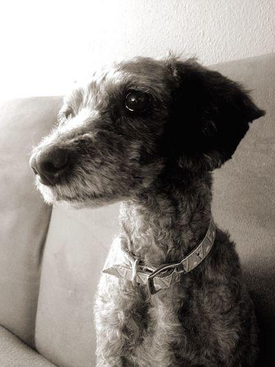 Ella es wanda/ She is wanda 🐶 Puertovallarta Eyem Best Shots Fotobymarc Photography Photooftheday Photo Perrito Perro Dogs Photodog Wanda Eyeemphotography