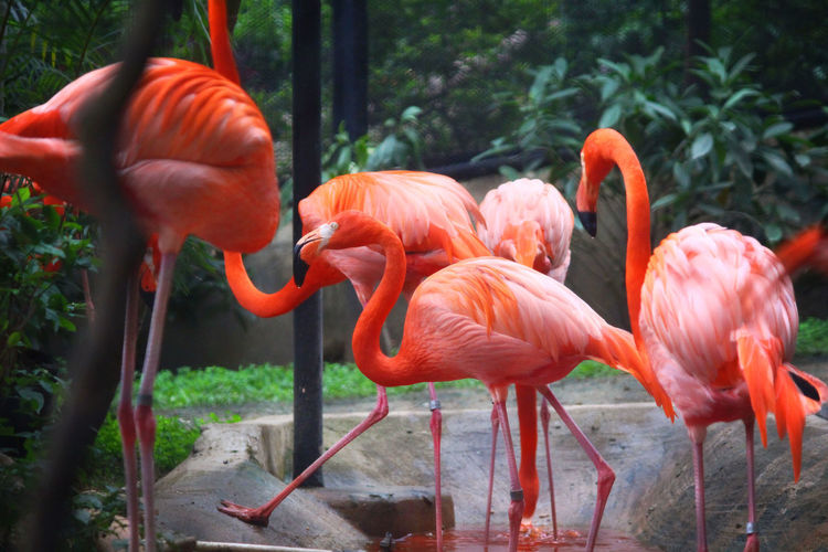 View of flamingos in zoo